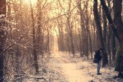 一个多雪的森林的葡萄酒照片 库存图片