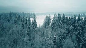 一个多雪的森林的鸟瞰图在冬天 股票录像