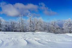 一个多雪的领域 免版税库存照片