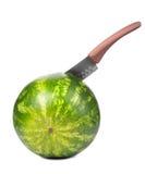 一个大圆的绿色镶边西瓜的特写镜头在白色背景的,刺中与一把巨大的刀子 库存照片