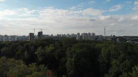 一个大桦树的天线在一个森林里在乌克兰在一好日子在夏天 股票视频