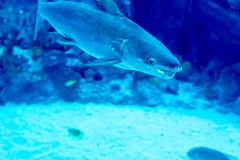 一个大海水族馆的模糊的照片用不同的销售水鱼和珊瑚礁的 库存照片