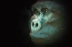 一个大猩猩的面孔在黑暗的 免版税库存照片