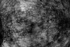 一个大章鱼的湿皮肤的纹理 明亮抽象的背景 库存照片