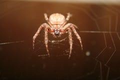 一个大蜘蛛网夜 库存照片
