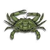 一个大西洋螃蟹的传染媒介图象 免版税库存照片