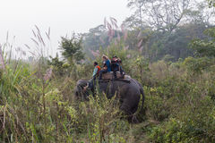 一个大象徒步旅行队的游人在Chitwan国家公园,尼泊尔 图库摄影