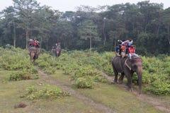 一个大象徒步旅行队的游人在Chitwan国家公园,尼泊尔 库存照片