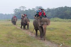 一个大象徒步旅行队的游人在Chitwan国家公园,尼泊尔 免版税库存图片