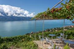 一个大阳台在湖Leman上的葡萄园里 免版税库存图片
