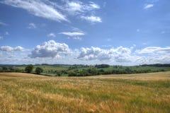 一个大麦领域在中间夏天,英国乡下的看法 免版税库存图片