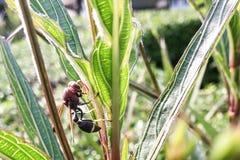 一个大黄蜂 免版税库存图片