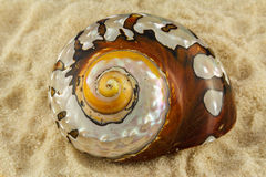 一个大贝壳 图库摄影
