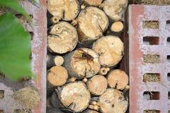 一个大黄蜂 免版税图库摄影