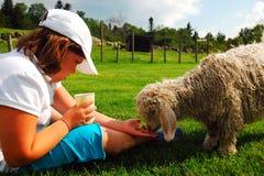 一个女孩喂养一只羊羔 图库摄影
