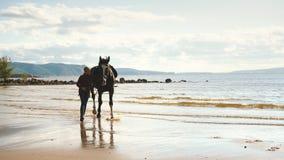 一个女孩在与马的海滩走 股票录像
