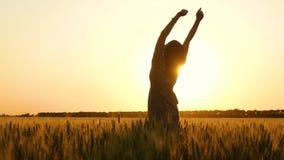 一个女孩的剪影日落的 年轻女人在麦田中间站立并且举了她的手,转动  股票录像