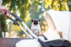 一个女孩的特写镜头在有一辆婴孩白色婴儿推车的一个公园在公园 免版税图库摄影