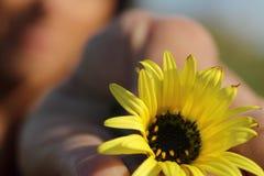一个女孩的Bokeh有一朵黄色花的在她的手上 库存图片