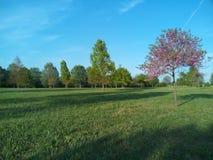 一个好的公园在威尼斯 免版税库存图片