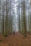 一个妇女身分的图象在寻找她的在高松树中的足迹的狗在森林里 免版税图库摄影