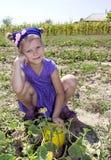一个孩子用在庭院的一个瓜 库存照片