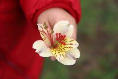 一个孩子的手与花的 库存照片