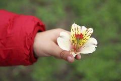 一个孩子的手与花的 库存图片