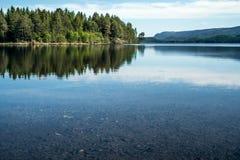 一个安静的平安的夏天早晨有在透明的镇静湖的看法有小卵石的在底部和绿色森林 图库摄影