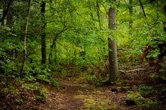 森林道路 免版税库存图片