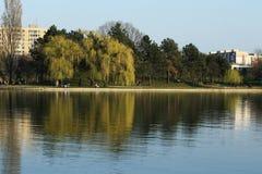 一个完善的晴天 步行的完善的时光在公园 免版税库存照片