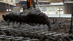 一个宽挖掘机桶从河的底部投下地面 清洗和加深渠道 股票录像