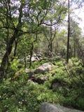 一个密集的森林的看法 免版税库存照片