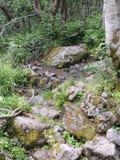 一个密集的森林的看法 免版税库存图片