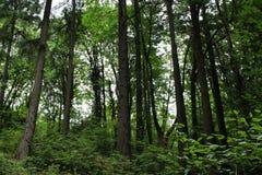 一个密集的森林的美丽的景色 免版税库存照片