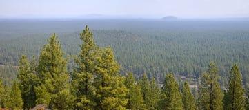 一个密集的森林的风景在中央俄勒冈 免版税图库摄影