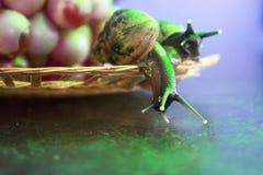 一个对在一块柳条板材的蜗牛用葡萄 图库摄影