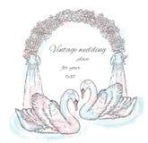 一个对在婚礼附近的天鹅成拱形 皇族释放例证