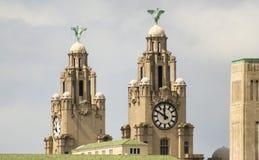 一个对在皇家肝脏大厦的肝脏鸟 免版税库存照片