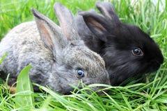 一个对在草的兔子。 免版税库存照片