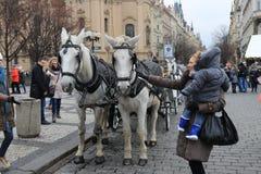 一个对在街道上的轻驾车赛用马在布拉格 免版税库存照片