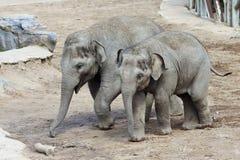 一个对婴孩亚洲动物园大象 免版税库存图片