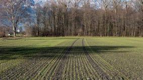 一个对称草甸在瑞士 免版税库存照片