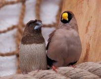 一个对鸟 免版税库存照片