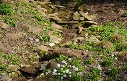 一个小假山花园 免版税库存照片