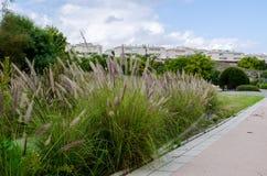 一个小公园在托雷维耶哈,西班牙 免版税库存照片