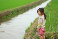 一个小女孩是在稻田在越南的北部的乡下 免版税库存图片