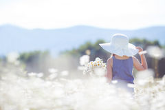 一个小女孩的夏天画象戴西的领域的 库存照片