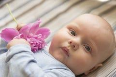 一个小孩子拿着一朵桃红色牡丹花,特写镜头 库存图片