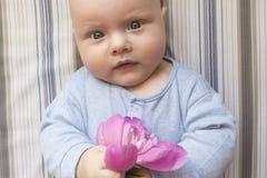 一个小孩子拿着一朵桃红色牡丹花,特写镜头 免版税库存照片